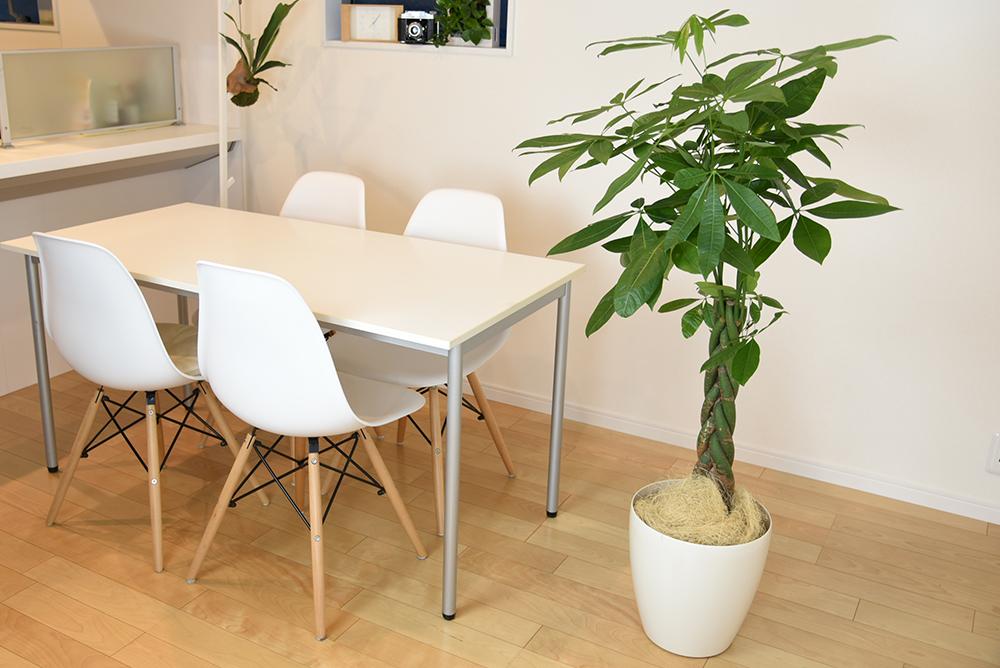 オフィスにぴったりな観葉植物